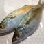 ปลาทูฟิตจัมโบ้ thumbnail 2