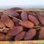 อินทผาลัม 400 กรัม Plam fruit 12 กล่อง thumbnail 2