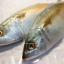 ปลาทูฟิตจัมโบ้ thumbnail 1