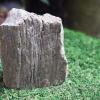 ฟอสซิลไม้กลายเป็นหิน(Petrified Wood)