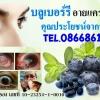 อายแคร์ซอท์ฟเจล BGM Eyecare Softgel / บลูเบอรี่ อายแคร์ซอฟท์เจล Blueberry Eyecare Softgel