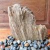 ฟอสซิลไม้กลายเป็นหิน (Petrified Wood)