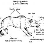 บุคลิกของสุนัขที่มีความสมดุล กับ สุนัขที่ไม่สมดุล (2)