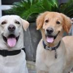 บุคลิกของสุนัขที่มีความสมดุล กับ สุนัขที่ไม่สมดุล (1)