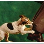วิธีป้องกันสุนัขกัด (1 )