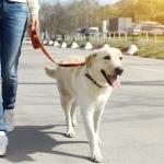 3 ข้อ สูตรการสร้างสมดุลให้สุนัข โดยซีซาร์ มิลลาน