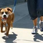 """วิธีพาสุนัขไป """"ออกกำลังกาย"""" อย่างซีซาร์ มิลลาน (มีคลิป)"""