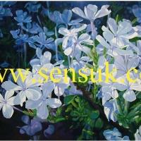 ภาพวาดดอกไม้