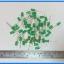 50x LED Green Color 5mm (แอลอีดีสีเขียว 5มม 50 ตัวต่อชุด) thumbnail 2