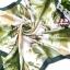 ผ้าพันคอผ้าซาติน Green Tree thumbnail 1