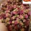 ชาดอกกุหลาบ Rose Tea ขนาด 100 กรัม มีวิตามินซีสูง จึงช่วยในเรื่องการขับถ่าย และชะล้างสารพิษในร่างกาย (ไม่คิดค่าจัดส่งเพิ่ม) thumbnail 1
