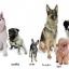 สนทนาภาษาสุนัข (How to speak dog) thumbnail 2
