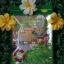 เจียวกู่หลานชนิดพร้อมชง Teabag เจียวกู่หลานสายพันธุ์จีน เกรดธรรมดา ขนาดบรรจุ 30 ซอง ราคาซองละ 89 บาท thumbnail 1