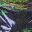 เจียวกู่หลานสายพันธุ์จีนเกรดเอ คุณภาพระดับดีมาก คัดเฉพาะยอดอ่อนใบเจียวกู่หลานเท่านั้น น้ำหนัก 100 กรัม thumbnail 2