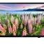 "LED TV 40"" SAMSUNG DTV UA40J5200 รุ่นใหม่ล่าสุด ราคาพิเศษ โทร 097-2108092, 02-8825619 thumbnail 1"
