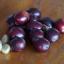 เมล็ดกาแฟอาราบิก้า (Arabica) 100% ชนิดคั่วกลาง เมล็ดกาแฟออร์แกนิค ปลูกแบบธรรมชาติ ปลอดสารเคมี กาแฟจากยอดดอย ม่อนดอยลาง อ.แม่อาย จ.เชียงใหม่ thumbnail 2